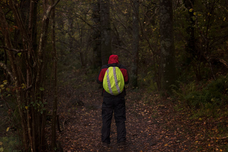 Rear view of person hiking in forest