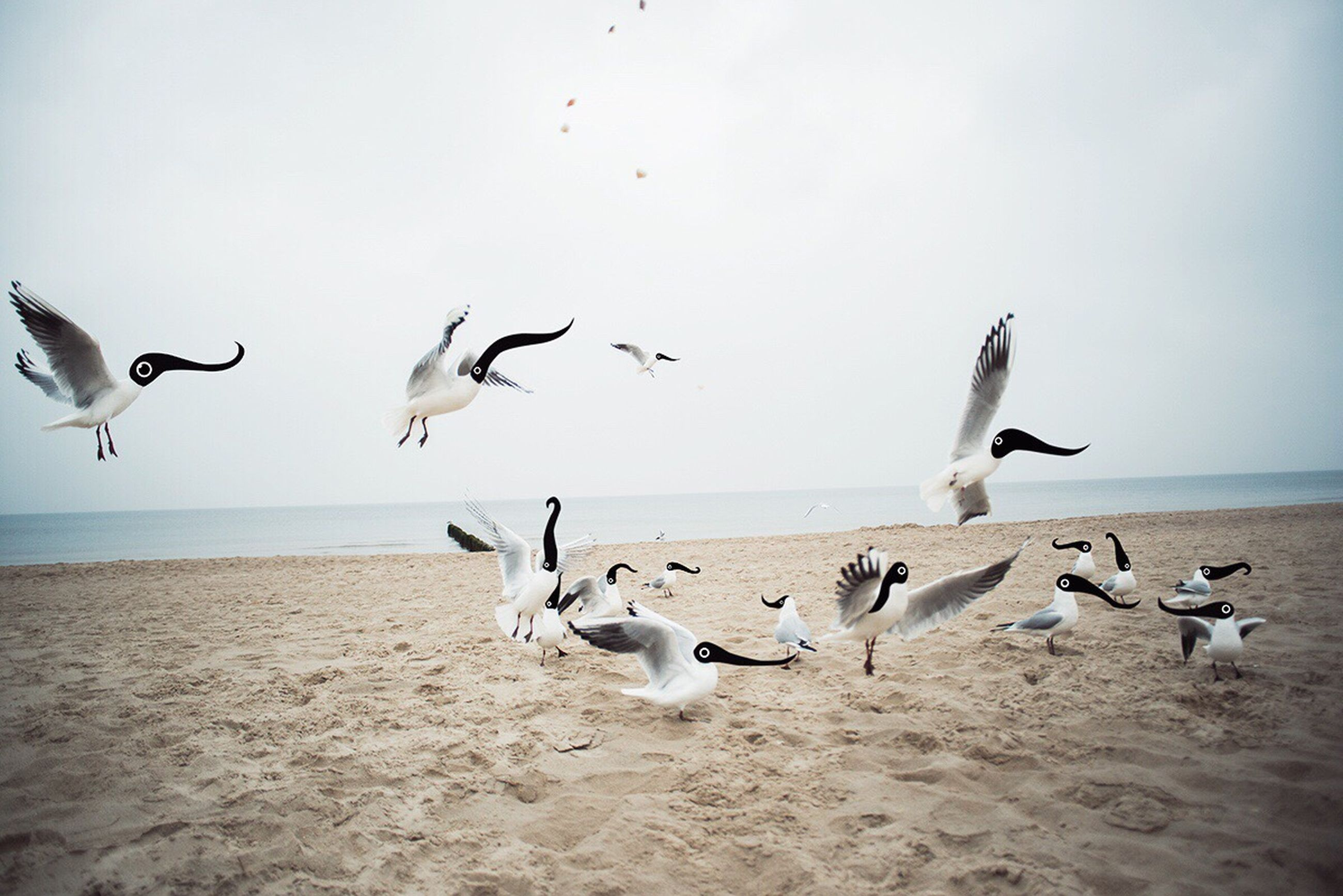 bird, beach, animal themes, sea, animals in the wild, flying, seagull, wildlife, sand, flock of birds, shore, horizon over water, water, sky, nature, spread wings, medium group of animals, beauty in nature, tranquil scene