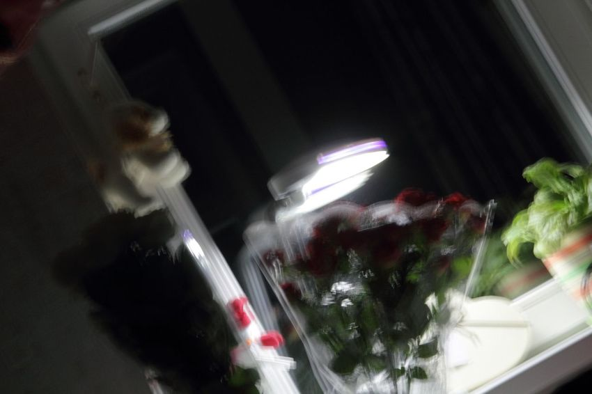 Nofocus  Notfocussed Blurred Motion