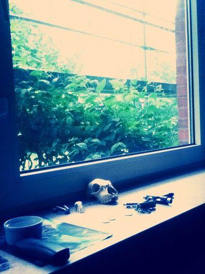 Skull On The Window Pane