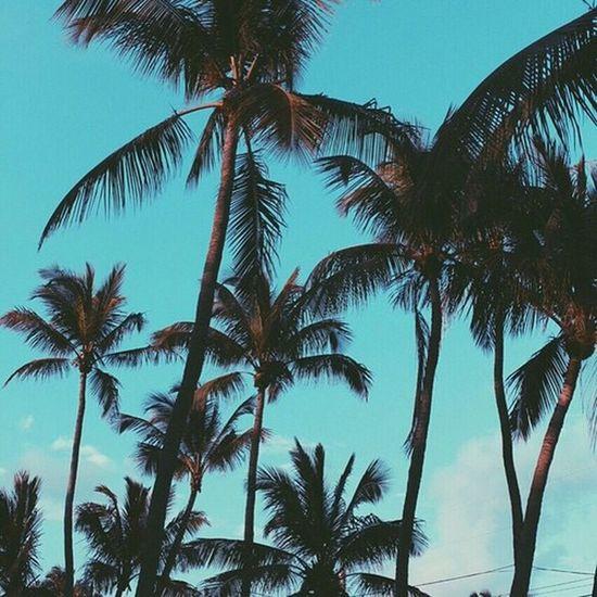 Taking Photos Trees Palm Trees Beautiful Landscape Enjoying Life Summer Photography Love Sunset
