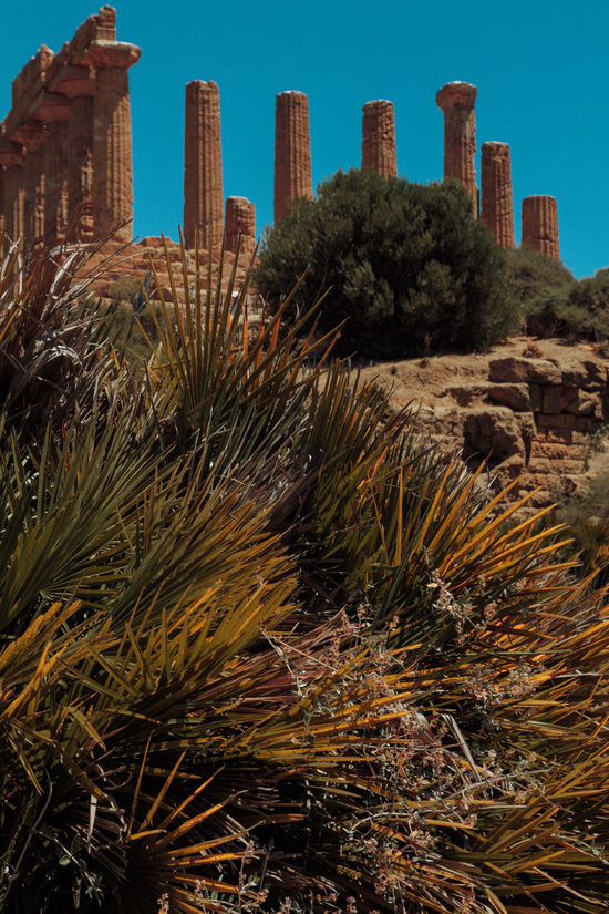 Agrigento Ancient Sicily Ancient Architecture Arid Climate Building Exterior Cactus Day Desert Growth Italy Nature No People Outdoors Plant Roman Time Saguaro Cactus Sky Temple