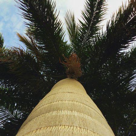 Hanging Out TreePorn Trees Streetphotography Hi! Taking Photos EyeEm Best Shots Check This Out Ramadan  Enjoying Life