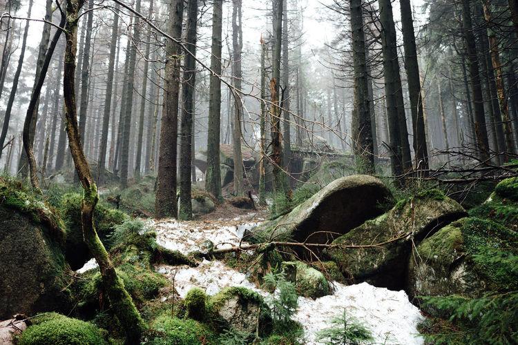 Photo taken in Schierke, Germany