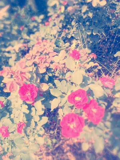 If you like. Flowers Taking Photos
