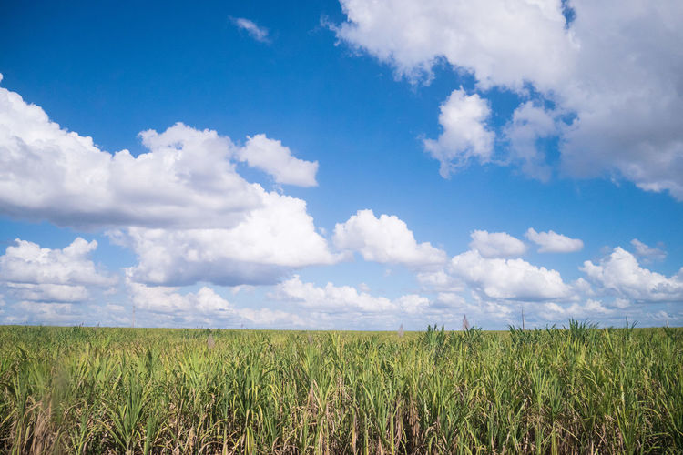 Cuba Agriculture Beauty In Nature Carribean Cloud - Sky Day Field Growth Landscape Nature No People Outdoors Rural Scene Scenics Sky Sugar Cane Tranquility