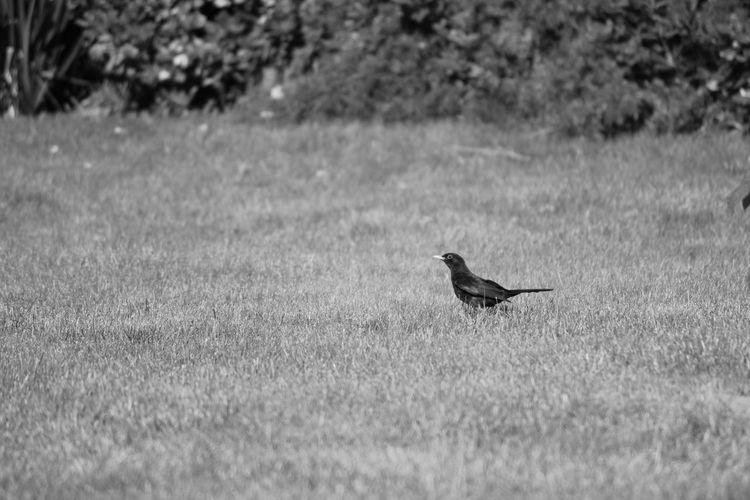 Alone Aniamls Animal Bird Detail Grass Wildlife