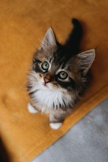 High angle portrait of cat