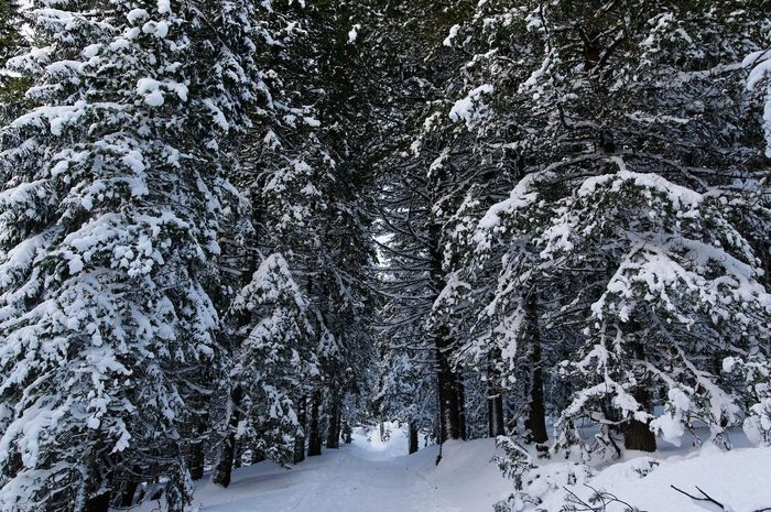 Snow Winter Cold Temperature Tree Beauty In Nature Nature Forest No People Snowing Landscape Scenics Outdoors Sky Day EyeEmNewHere High Tatras :) Slovakia Nature Travel Destinations Landscapes Travel Forest Path Slovakia🇸🇰 Winter Freezing ❄ Tranquility