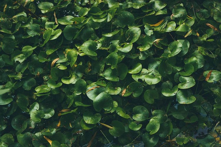 Green Color Leaf Nature Freshness No People Growth Full Frame Day Outdoors Backgrounds Beauty In Nature Close-up