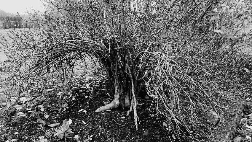 Small Tree Shrub Botanical Garden Munich February 2016