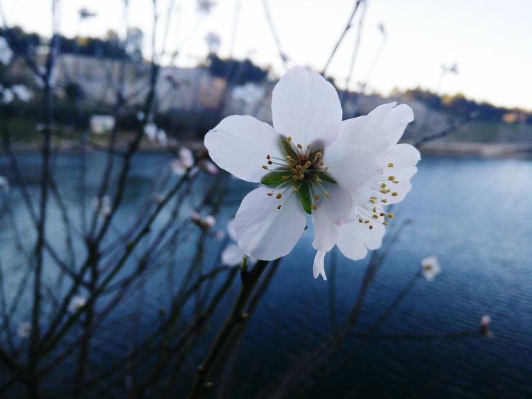 One last Blossom, before the Winter takes over completely. Nature Flowers