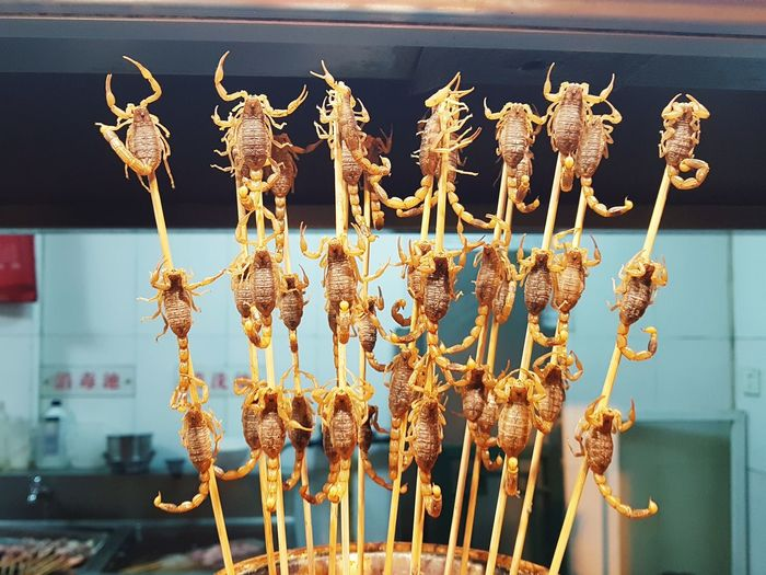 Fried Scorpions Fried Scorpion Food Street Food Chinese Street Food Food Market International Food Traditional Food China Asien Food Hanging Drying Snack Business Finance And Industry Retail  For Sale Close-up Food And Drink Deep Fried  Salted Fried Food Concession Stand