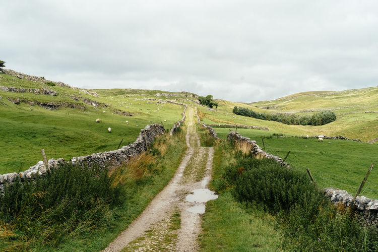 Scenic View Of Country Road Through Field
