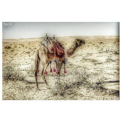 صورة ارشيفية نفود الثويرات 2008 photo hdr ksa animal