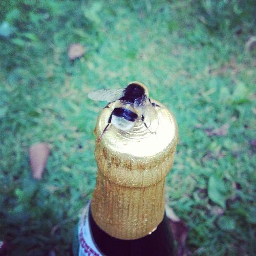 #bier naschende #hummel! ❤ Bier Hummel