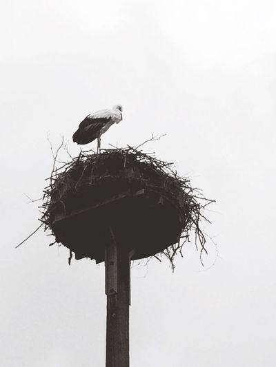 Stork BLCK&WHT