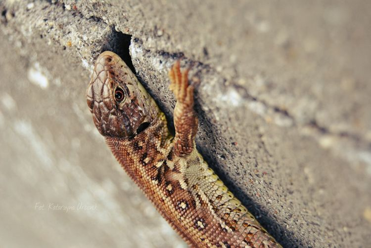 Close-Up Of Reptile On Wall
