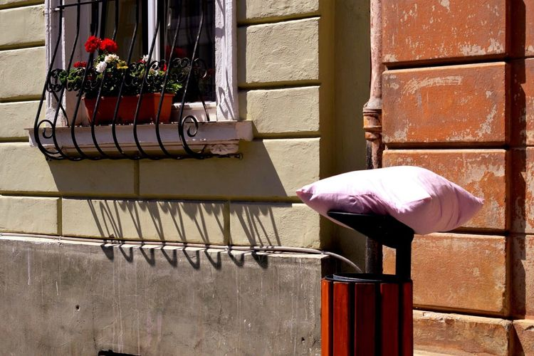 Taking Photos Pillow Pillows Flowers Flower Enjoying Life Wandering Around Colorful Taking Photos Romania Brasov Romania Brasov Check This Out Colour Colour Of Life TakeoverContrast The City Light