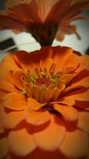 Home Is Where The Art Is Flowers :) I Grew This Country Living Orange Flower