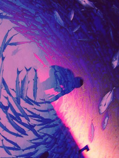 Sea Life Sea Sunset Sky People Fish