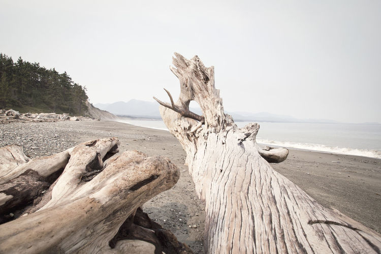 View of log on calm beach