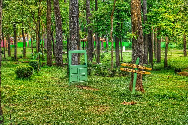 nice Green Color Grass Nature Tree Outdoors No People Day