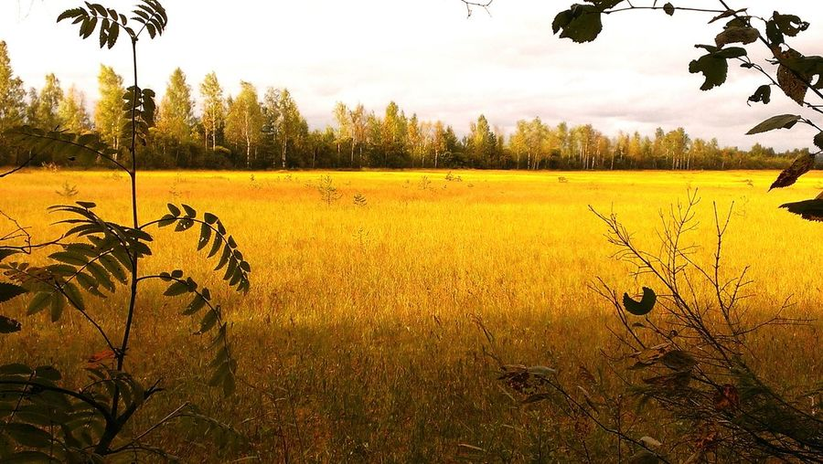 осенний пейзаж, поле EyeEmNewHere осеннийлес осень желтаялиства поле золотаяосень Золотая осень Autumn Autumn colors