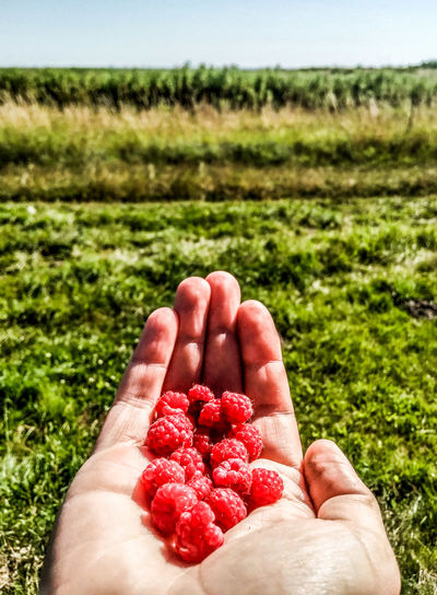 The year's first berries