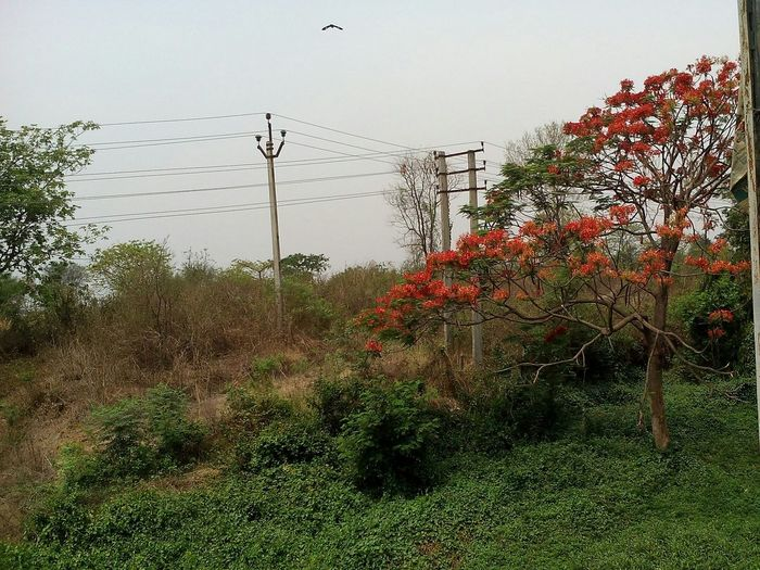 Red Flowers Nice View Human Interference Red Flower On The Tree In The Morning In The Moment April 2016 April Showcase The Great Outdoors With Adobe Envision The Future