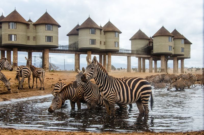 Panoramic view of zebras and buildings against sky