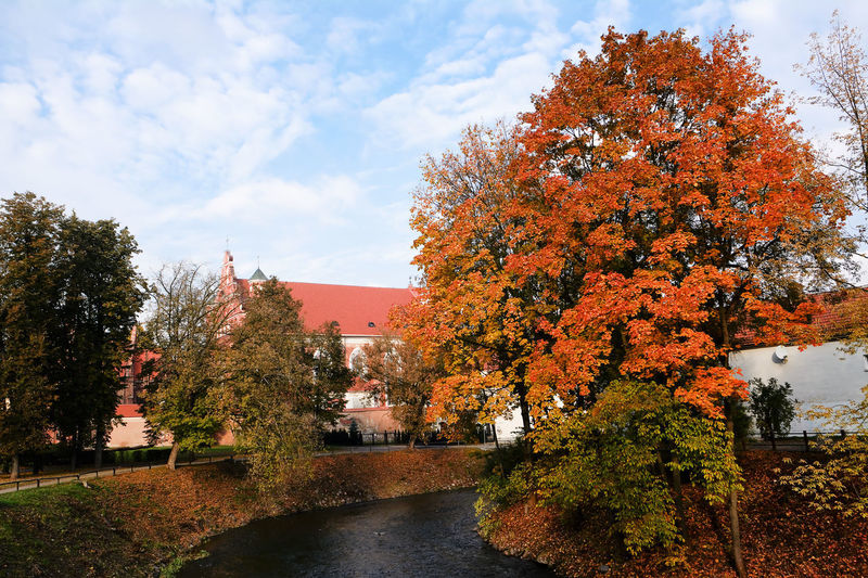 Vilnia river in autumn in Vilnius (Lithuania) Autumn Baltic Lithuania Nature Vilnius Wilno Capital Respublika River Season  Uzupis Water