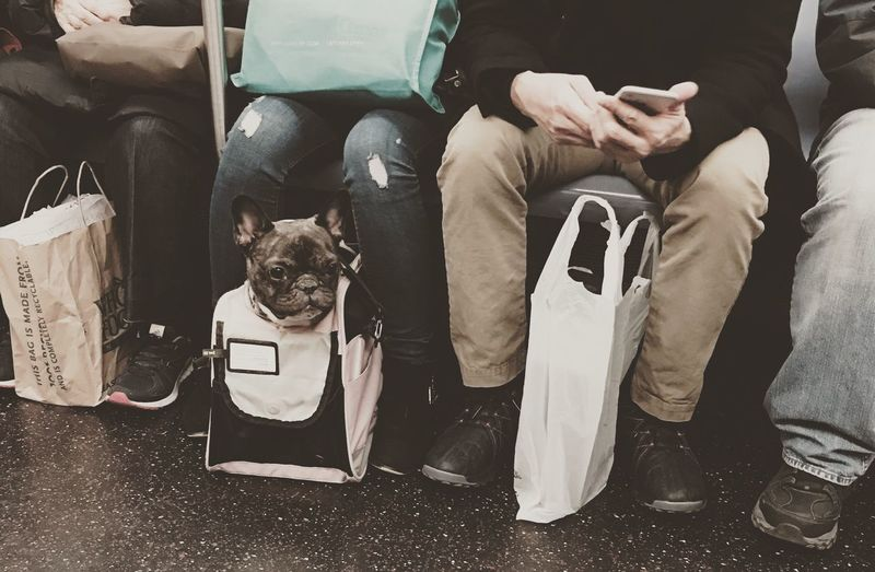 Sitting Pets Dog Low Section Indoors  People Animal Themes Mammal Adults Only Subway People Subway Traveling With Pets EyeEm Best Shots EyeEm