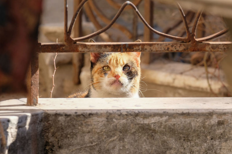 Close-up portrait of a stray cat