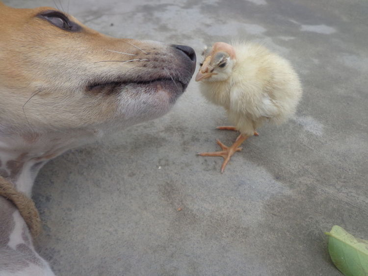 Animal Themes No People Close-up Dog And Baby Outdoors Young Bird Animal Wildlife Bird Day Nature Mammal