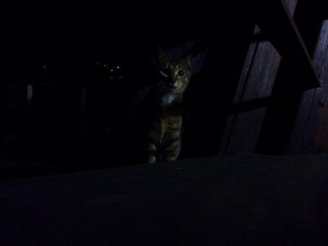 Seokchonlake Cats Seokchon Lake Cats Night Domestic Cat No People Feralcat Night Cat Animal