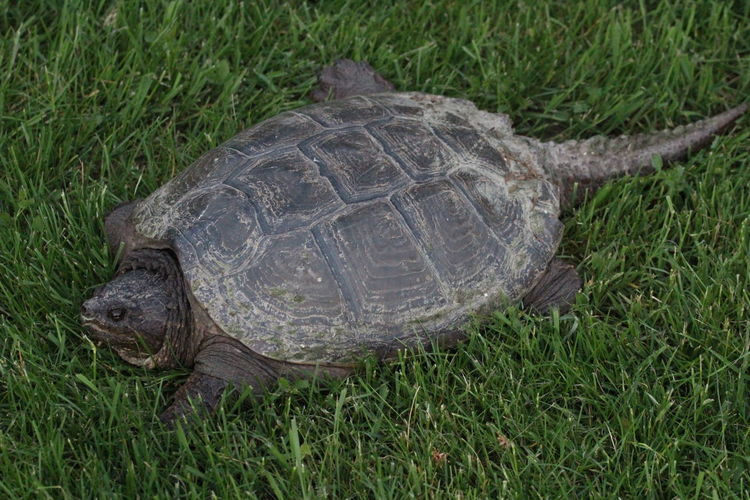 High angle view of tortoise on grass