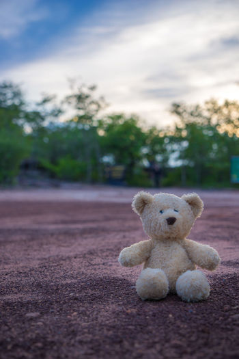 Teddy Bear On Field