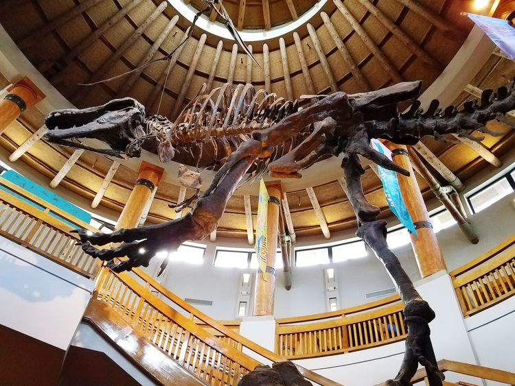 EyeEm Selects Low Angle View Indoors  Architecture Built Structure Florida Usa Park Travel Destinations Indoor Photo Island Of Adventure Theme Parks Jurassic Park