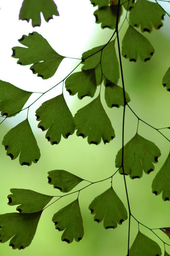 Amabere Caves Beauty In Nature Botany East Africa Fern Green Color Leaf Leaf Vein Leaves Tranquility Tropical Plants Uganda