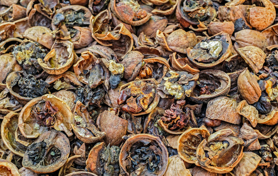 Cracked nuts infected with mold Bad Condition Mold Nuts Abundance Backgrounds Bad Close-up Corupted Cracked Day Decayed Defaced Dried Food Food Food And Drink Full Frame Infected Large Group Of Objects Mildew Mold Food Mold Mould Mouldy Nature No People Nuts And Seeds Nuts On The Ground Nutshell Outdoors Putrid Rotten