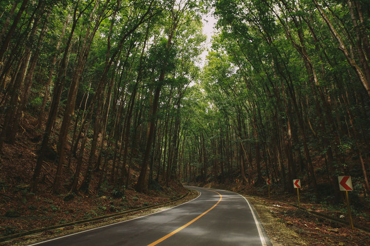 Bohol Bohol Philippines Curve Curve Road Forest The Drive Growth Lush Foliage Mahogany Nature On The Road Outdoors Park Perspective Road Roadtrip Shadows Tall Trees The Way Forward Tree Eyeem Philippines The Great Outdoors With Adobe The Great Outdoors - 2016 EyeEm Awards On The Way The Journey Is The Destination Been There. Lost In The Landscape Connected By Travel Summer Exploratorium Summer Road Tripping It's About The Journey