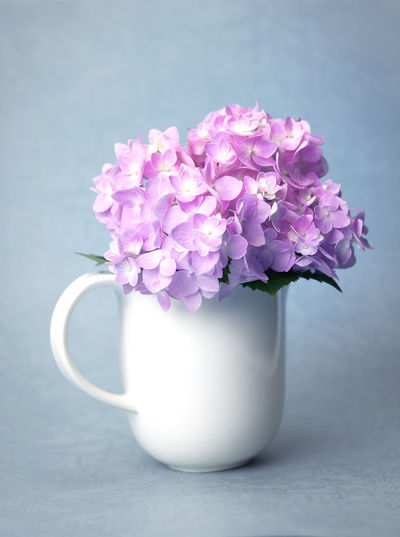 sweet hydrangea flowers in white vase Hydrangea Beauty In Nature Bunch Of Flowers Close-up Cup Flower Flower Arrangement Flower Head Flowering Plant Focus On Foreground Fragility Freshness Indoors  Nature No People Petal Pink Color Pitcher - Jug Plant Purple Still Life Table Vase Vulnerability