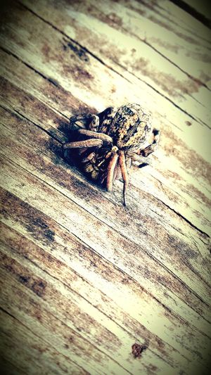 Nature On Your Doorstep Nature Love Spiders