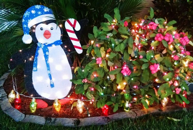 Christmas Photography Holiday Photography Pink Flowers Flowers Christmas Christmas Decoration Christmas Lights Penguin Christmas Penguin Christmas Spirit Christmas Photo Christmas Photography Flowers With Lights Flowers With Christmas Lights Shades Of Winter