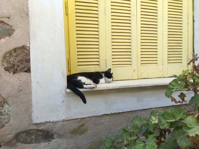 Greek cat sleeping Musketeer Black And White Cat Greek Cats Greek Cat Animal Themes Architecture Building Exterior Built Structure Cat Day Domestic Animals Domestic Cat Feline Mammal Nature No People One Animal Outdoors Pets Shutters Yellow