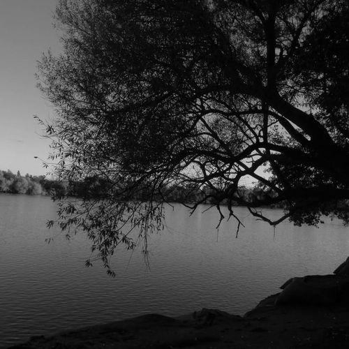 Dark Dark Arbol Solitario Sad Depresión Depressive Tristeza