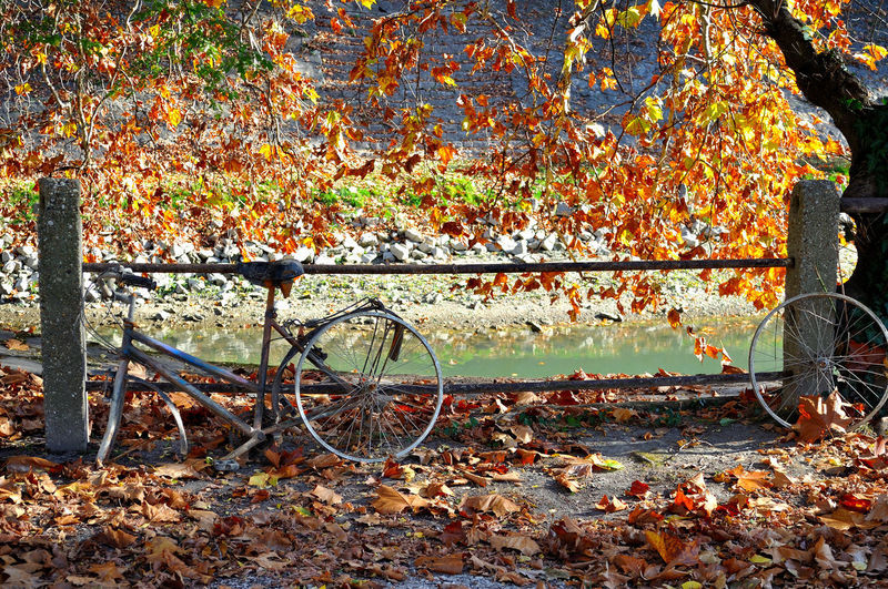 Autumn Leaf Plant Part Orange Color Nature No People Land Vehicle Solitude And Silence Abandoned Fleeting