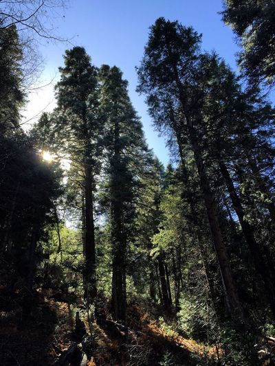 Mountain forest on the edge of Spring Forest Nature Landscape Palomar