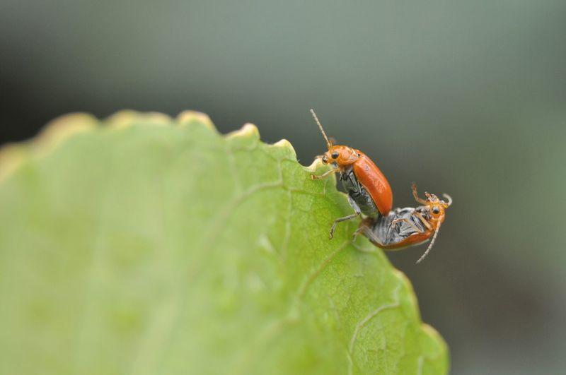 Bug Bug Bugs Animal Nature_collection Nature Photography Macro Photography Green